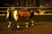 圖  1,   2<br> 「善得福」抵達沙田馬場檢疫馬房。