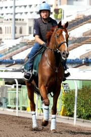 英國代表「紅色禮物」今日於沙田馬場作輕鬆操練。