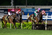 圖一、二<br> KrisFlyer國際短途錦標今晚於新加坡克蘭芝馬場舉行,由蘇保羅訓練的「友瑩格」(2號馬),於潘頓胯下一放到底,勝出這場途程1200米的一級賽。另一匹香港代表「天久」(紅帽)亦於此賽跑獲第三名。