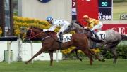 圖1, 2<br> 由蔡約翰訓練、莫雷拉策騎的「詠彩繽紛」(10號馬),壓倒「大印銀紙」(13號馬),勝出今日於沙田馬場舉行的香港三級賽慶典盃(1400米)。