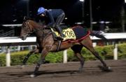 由苗禮德訓練的浪琴表香港短途錦標參賽馬「龍城勇將」,本週一早上於沙田全天候跑道作快試。