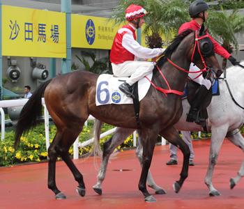 [img]https://racing.hkjc.com/racing/content/images/Horse/B311_l.jpg[/img]